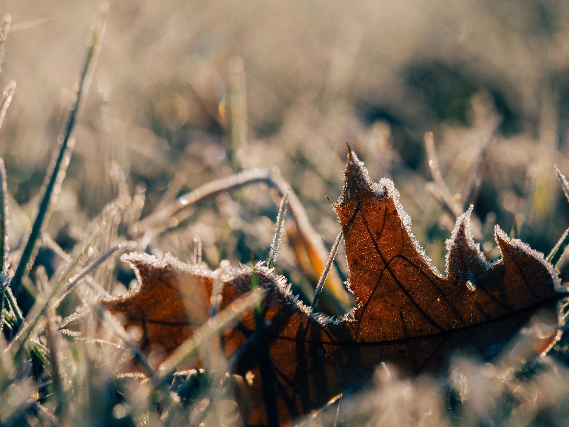 frost-1082238_1920-box-5