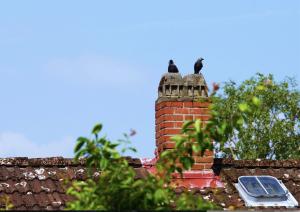 Birds nesting